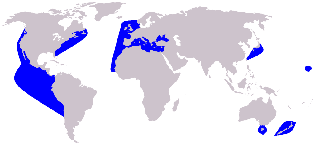 leefgebied gewone dolfijn