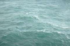 gewone-zeehond-k15-fb-1-06